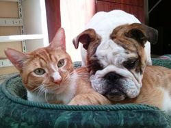 Doggy & Kitty