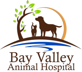 Bay  Valley Animal Hospital