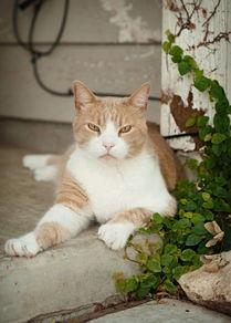 Oscar on the porch