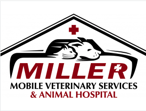 Miller Vet Play and Stay