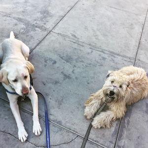 Sancho and Hazel
