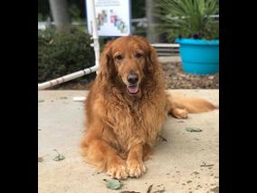 Doggie Day Camp