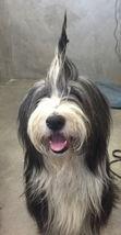 dog-hair-do
