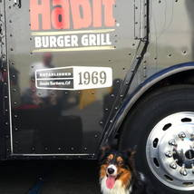 thehabit_burger_grill_dog_happy
