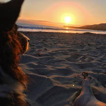 australian_shepard_sunset_dogbeach