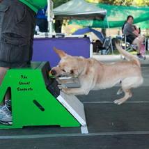 labrador_flyballbox_flyball_boxturn_tennisball_dogsports