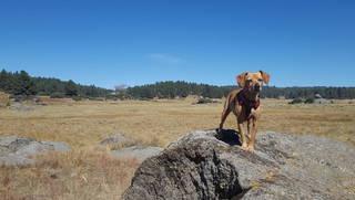 mutt_rock_dog_posing_stand_stay