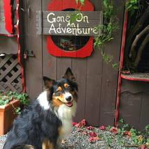 dog_adventure_australian_shepard