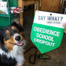 dog_smile_obedienceclass_obedience_dropout_smile_dogtraining