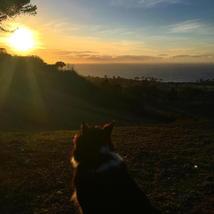 dog_sunset_beach_pretty