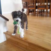 dog_cute_puppy_retrieve_trick_training_puppy_class
