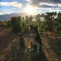 dogs_sunset_posing_shadows