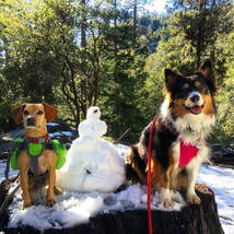 dogs_snow_snowman_cute