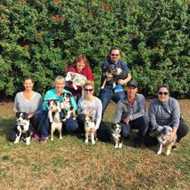 australian_shepards_obedience_class_dog_training