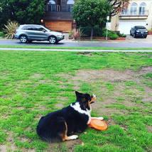 dog_frisbee_park_grass