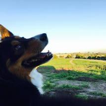 dog_smiling_grass