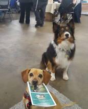 dogs_hold_trick_stay_sit_training_australian_shepard