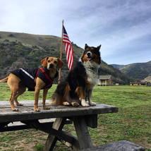 dogs_flag_american_flag