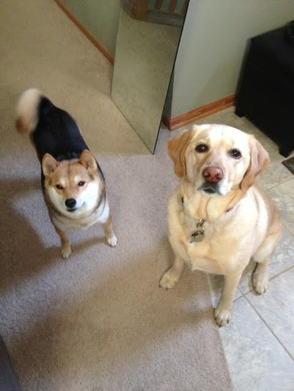 Sophie & Meeka