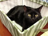 Deuce - hospital kitty