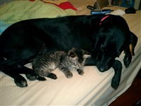 Hennessey (Dani's dog) and a PVH adoption kitty