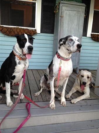 Lola, Savannah, & Oliver