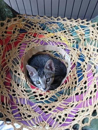 adoption kitty