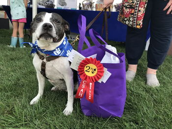 Carol Stream Animal Hospital Charity Dog Show
