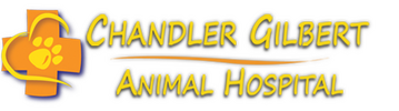 Chandler Gilbert Animal Hospital