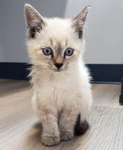 Kitten Care Charlotte