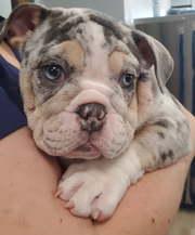 Puppy Care Charlotte