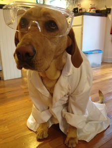 Your Lab results are in!