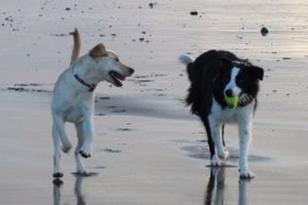 slideshow photo two dogs at the beach
