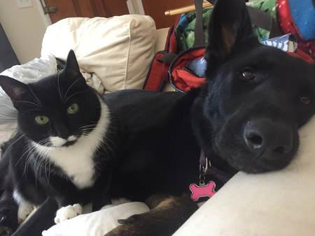 Staff Pets