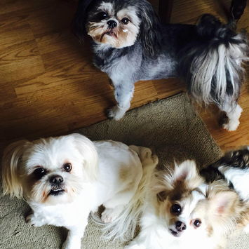 Teddy, Lilly and Elvis - Angie