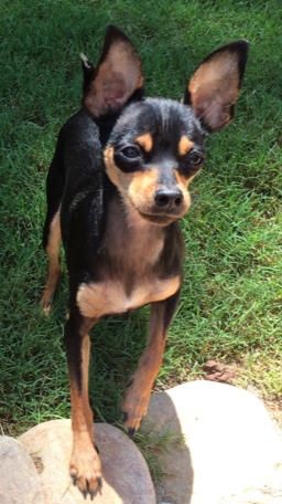 min pin in the grass