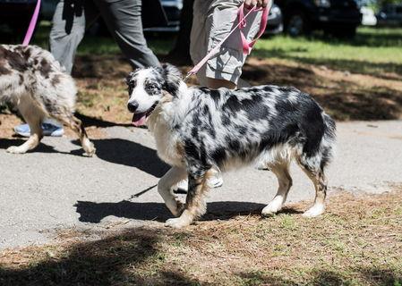 Dogwood Walk 2017