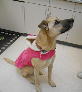 Ayla in pink coat