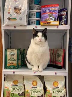 Toby on Shelf