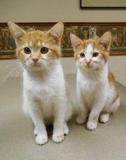 Twin kitties