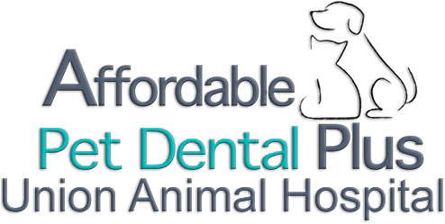 Pet Dental Plus