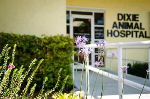 Dixie_Animal_Hospital_Garden_3