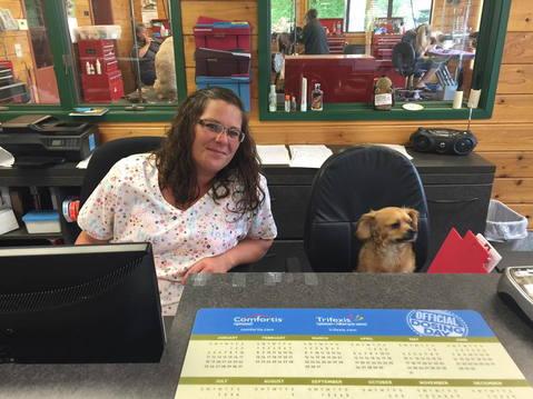 Dog sitting at front desk