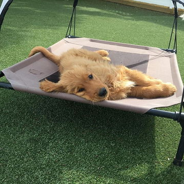 Dog lying on suspended bed
