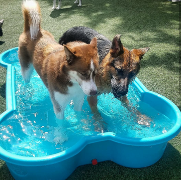 Dogs in wading pool