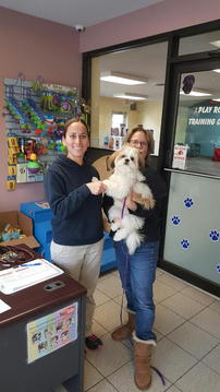 Checkin at Pet Services