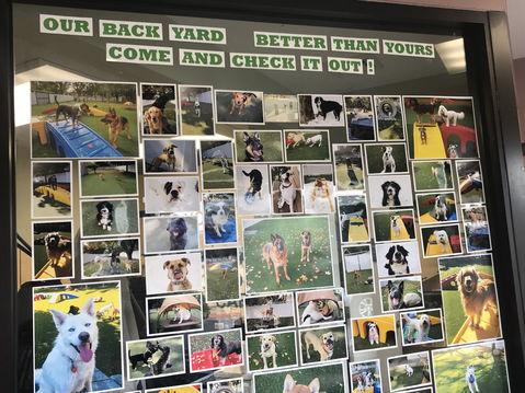 Wall of dog photos