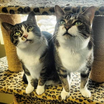 Cats in Cattery