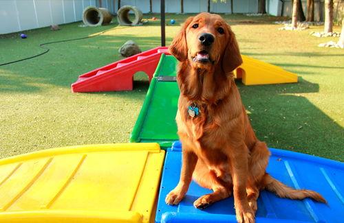 Dog sitting on play equipment