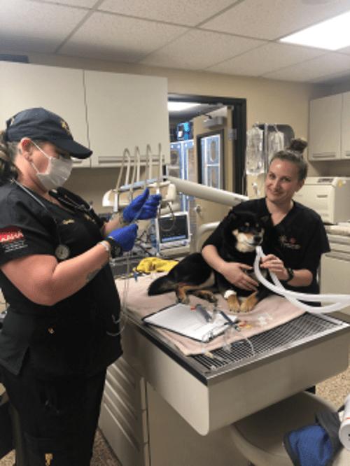 Veterinary Services - Family Pet Clinic of Redondo Beach